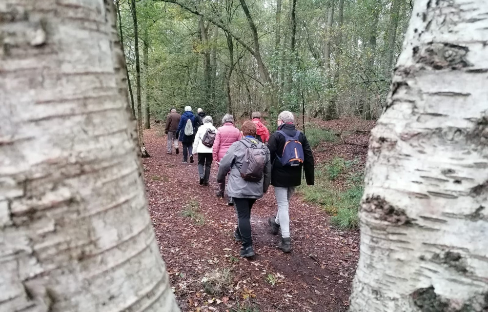 Wandelbegeleider gezocht programma starten met wandelen